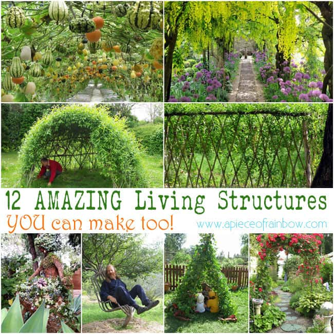 Amazing Living Structures