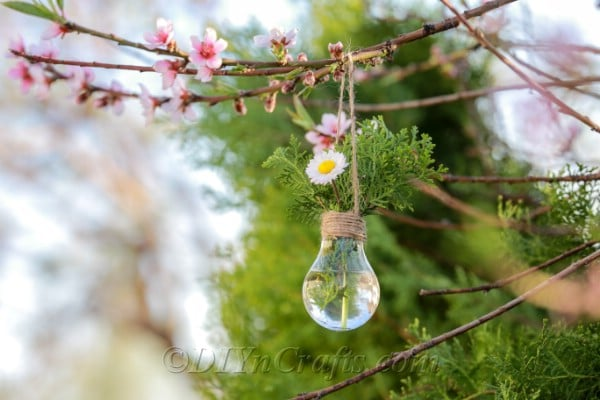 Bulb planter hanging from a tree