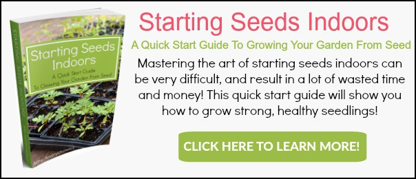 starting-seeds-indoors-banner-ad