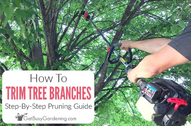 How To Trim Tree Branches: A Step-By-Step Guide For Beginners