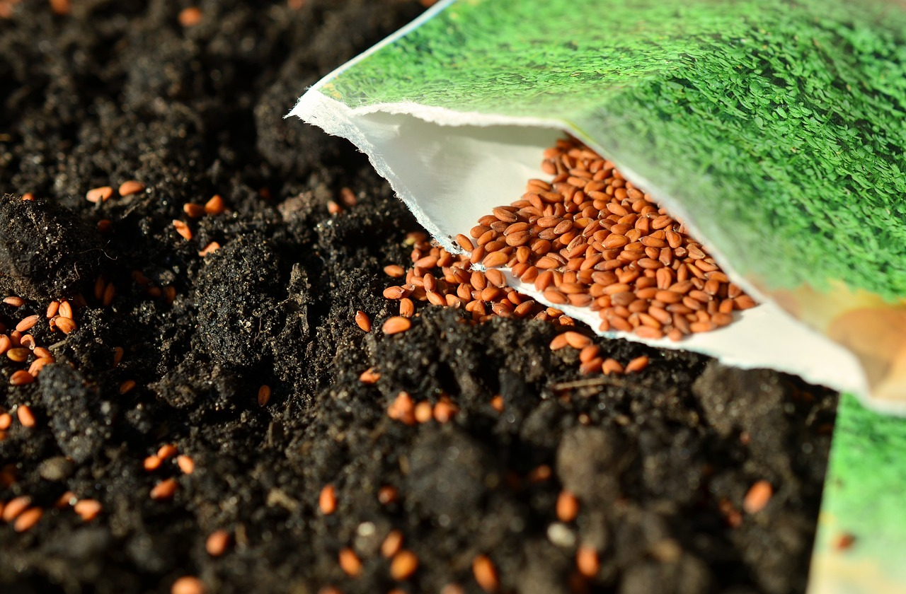 soaking seeds allows them to germinate quicker