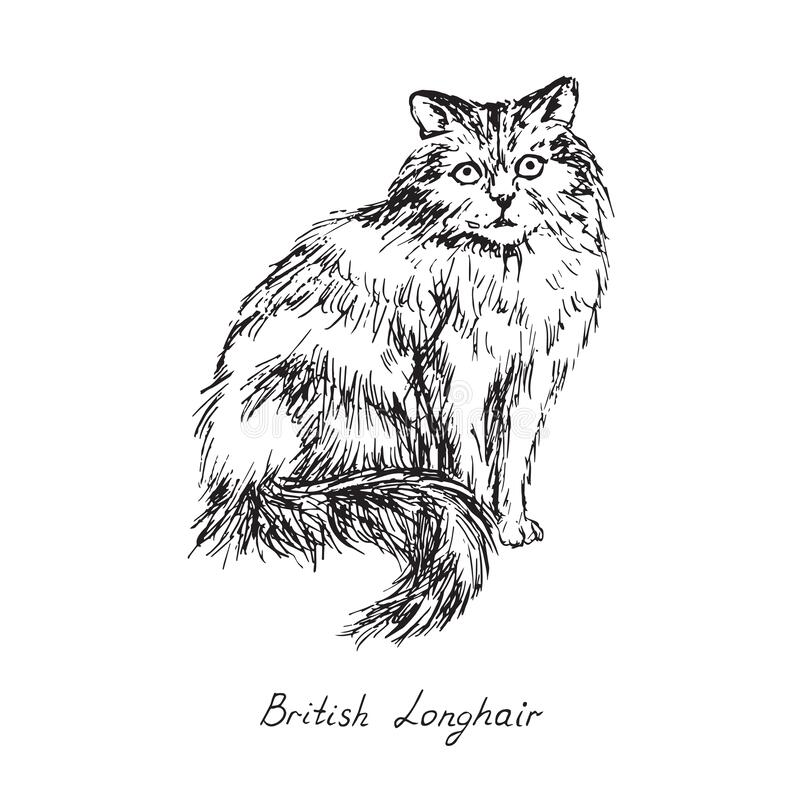 British longhair, cat breeds illustration with inscription, hand drawn doodle, sketch, black and white vector. British longhair, cat breeds illustration with stock photography
