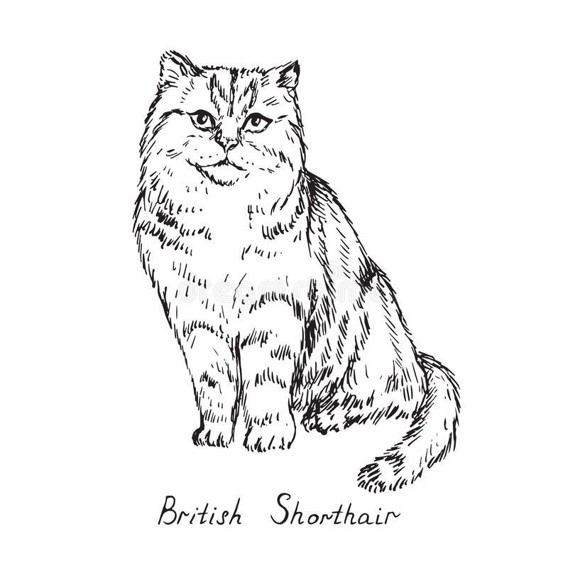 British shorthair, cat breeds illustration with inscription, hand drawn doodle, sketch, black and white vector. British shorthair, cat breeds illustration with royalty free stock photography