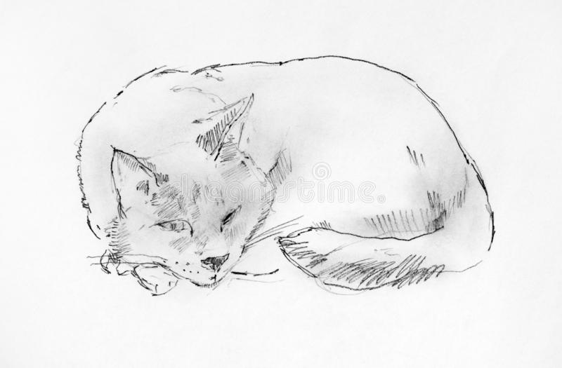 Sleeping cat. Pencil hand drawing. Black and white stock images