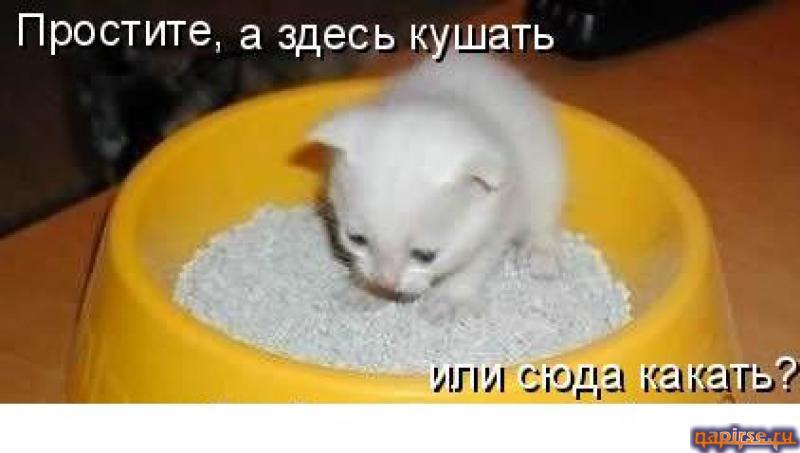 ������� ���� ����