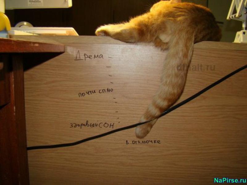 Смешные коты разные фото