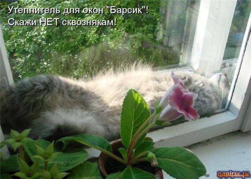 http://napirse.ru/pic/3612274110093490.jpg