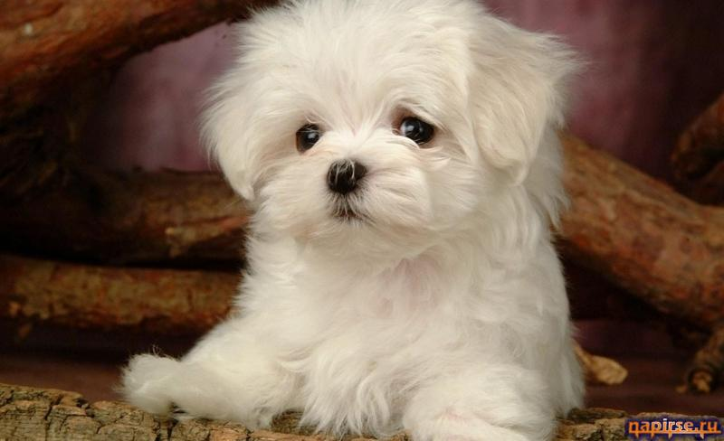 Милые щенки фото милых щенов