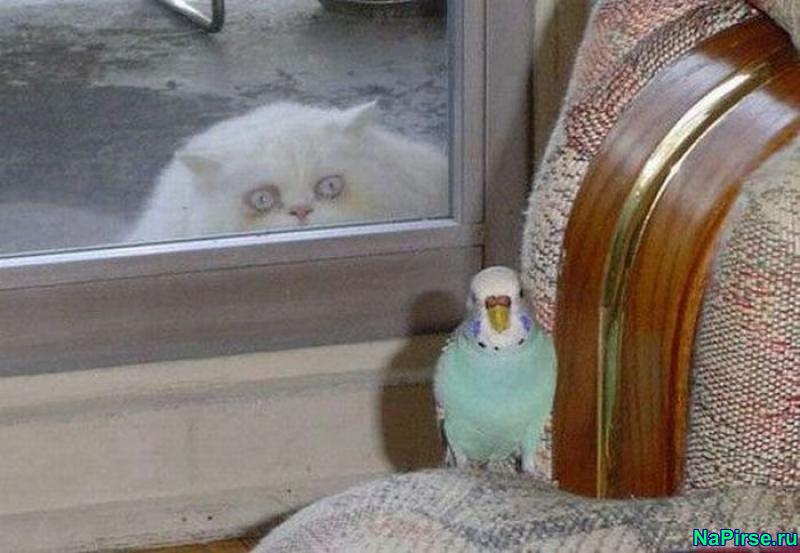 Кошек прикольные