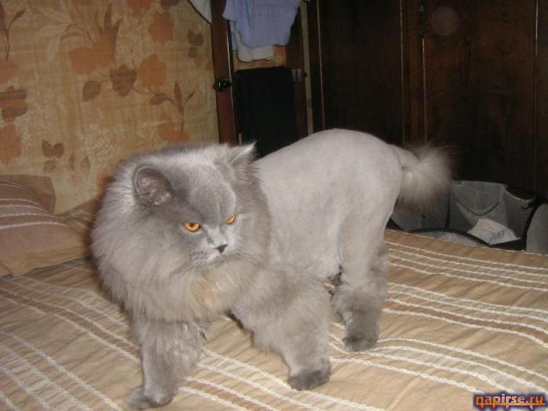 Игры стрижка котов